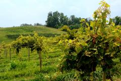 Attractions, Wineries