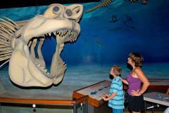 Calvert Marine Museum Megaladon Shark