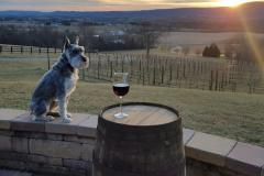Dog next to a wine glass