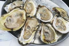 Oysters Served on a Tray
