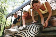 See Zeebras at the Catoctin Zoo Safari