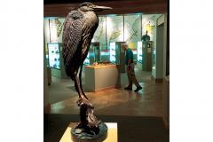 Exhibit in the Ward Museum