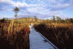 Cranesville Swamp Preserve