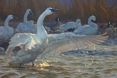 painting of swans in water