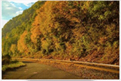Fall Foliage Experience in Allegany County
