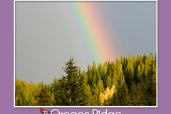 poster with rainbow