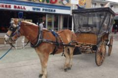 Carriage Rides in Ocean City