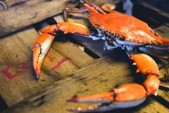 travel the crab & oyster trail