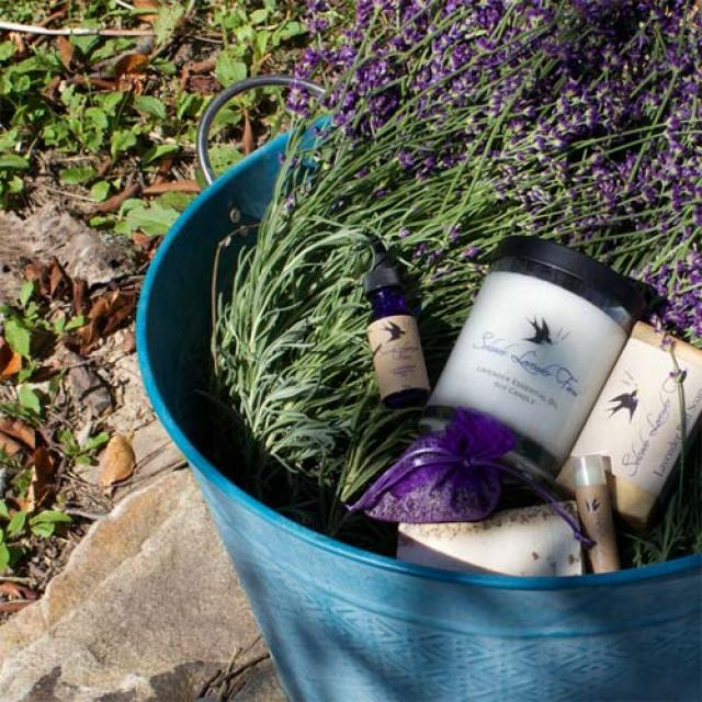 Lavender Farms | Visit Maryland