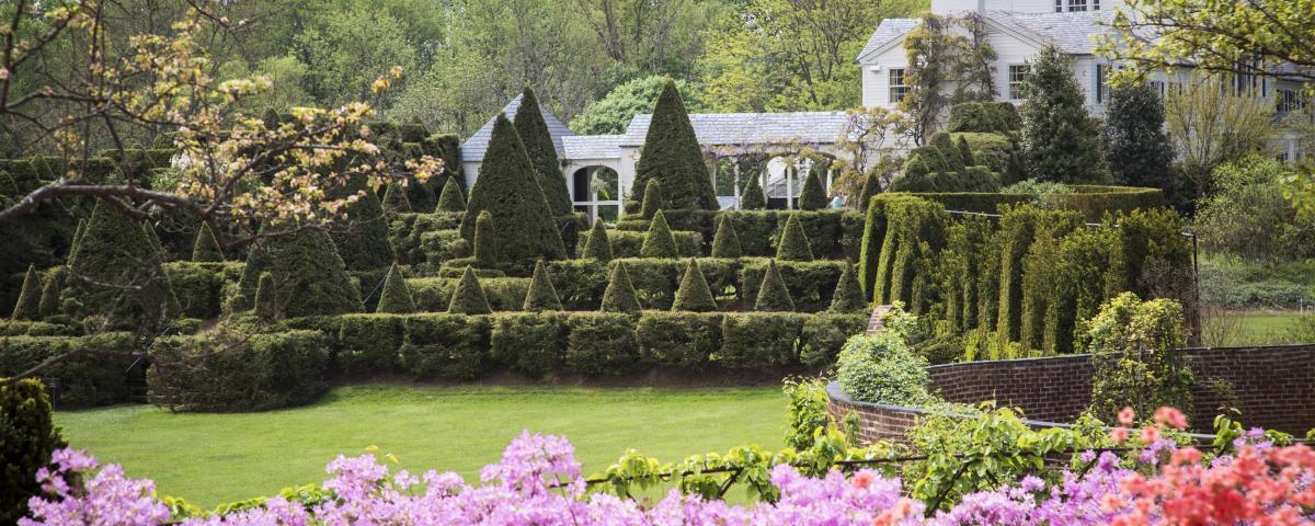 Ladew Topiary Gardens - Azaleas