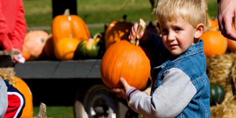 Pumpkin picking at Applewood Farm in Whiteford is a favorite fall family activity. The farm also offers a petting zoo, parties, train rides and other seasonal fun.
