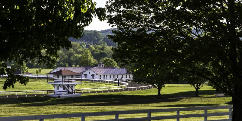 Sagamore Farm in Glyndon breeds, raises and trains Thoroughbreds with the goal of winning at horse racing's highest level. The farm's most famous equine resident was Native Dancer.