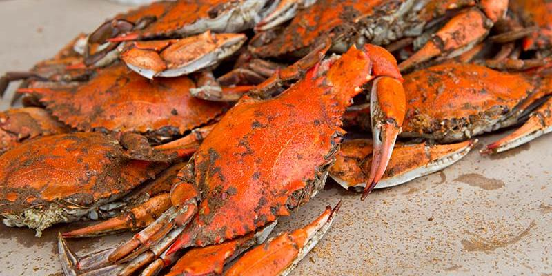 April through December are the best months to eat fresh steamed Maryland blue crabs, and there's no shortage of supply at the crab houses along this byway.