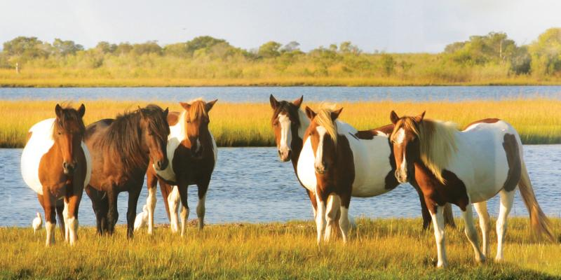 Visit the national park famous for its horses that roam free.