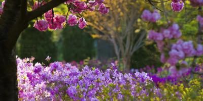 blooms at Sherwood Gardens