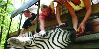 Zoo Safari at the Catoctin Wildlife Preserve and Zoo