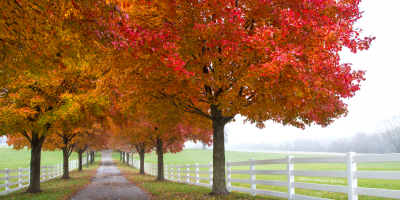 Take a fall foliage tour through Maryland's parks.