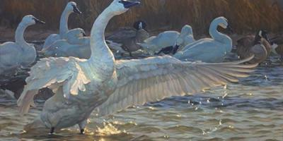 Waterfowl painting
